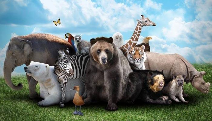 جانوروں سے اچھا برتائو کرنے کی ہدایت